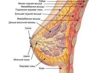 mammologiya-diagnostika