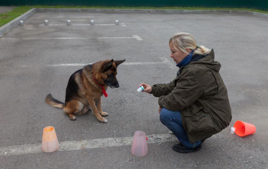 Кинологи в Москве учат собак диагностировать рак молочной железы